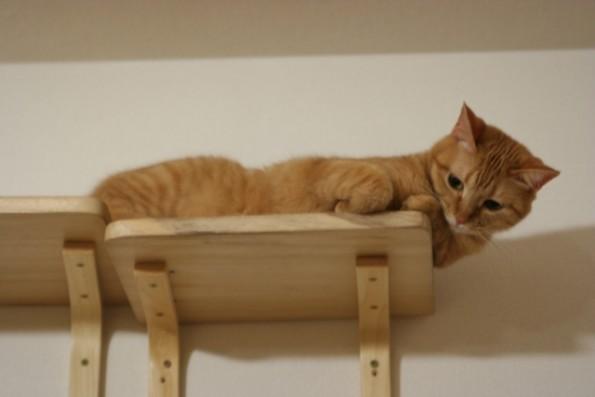 ペット共生設備|猫棚・キャットウォーク